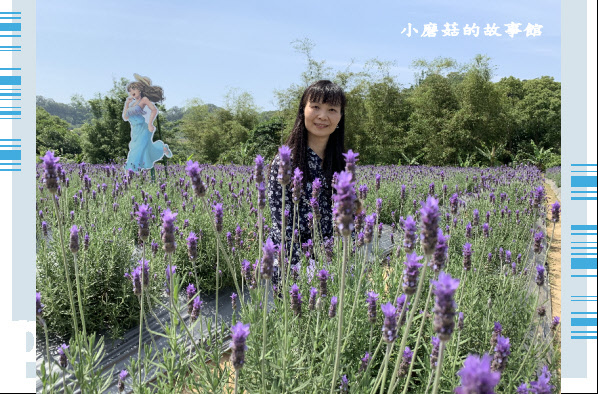 109.4.16.(42)葛瑞絲香草田.JPG