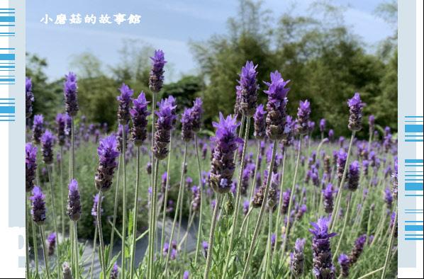 109.4.16.(68)葛瑞絲香草田.JPG
