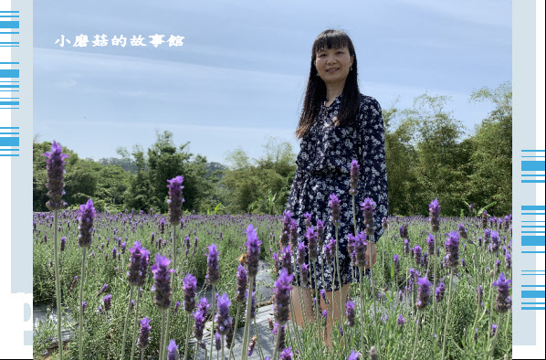 109.4.16.(75)葛瑞絲香草田.JPG