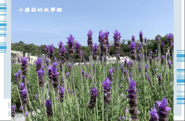 109.4.16.(88)葛瑞絲香草田.JPG