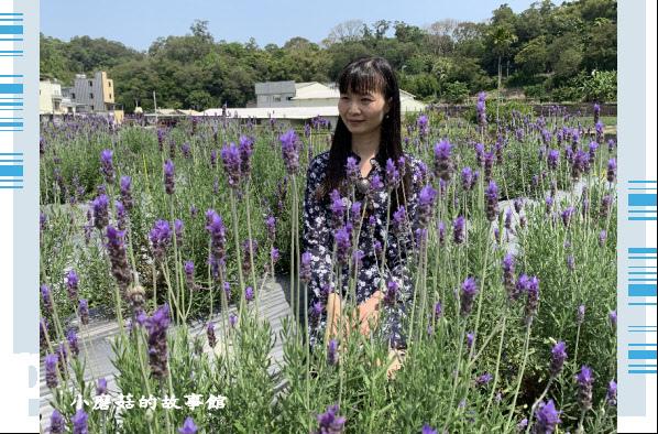 109.4.16.(91)葛瑞絲香草田.JPG