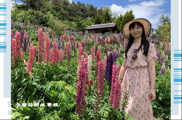 109.5.16.(55)福壽山農場‧魯冰花季.JPG