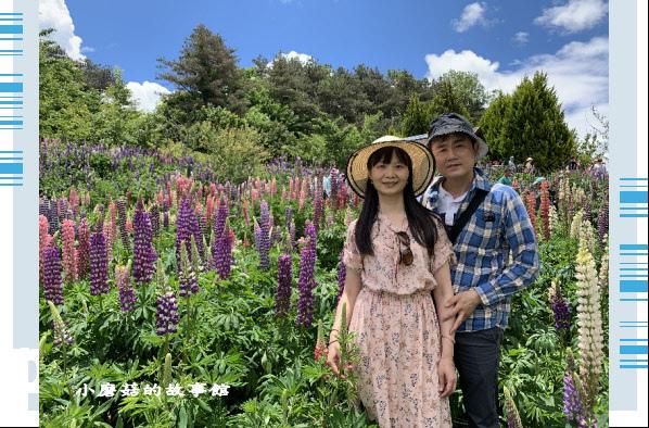 109.5.16.(63)福壽山農場‧魯冰花季.JPG