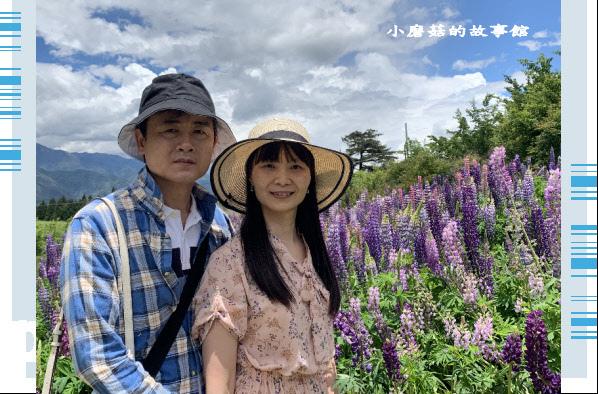 109.5.16.(116)福壽山農場‧魯冰花季.JPG