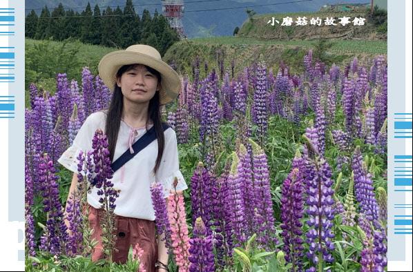 109.5.16.(120)福壽山農場‧魯冰花季.JPG