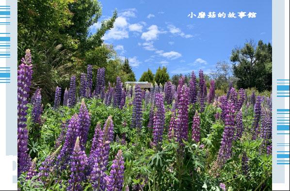 109.5.16.(156)福壽山農場‧魯冰花季.JPG