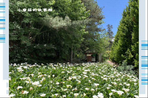 109.5.16.(198)福壽山農場‧魯冰花季.JPG