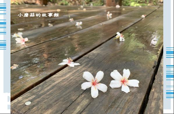 109.5.7.(6)苗栗-湖畔花時間.JPG