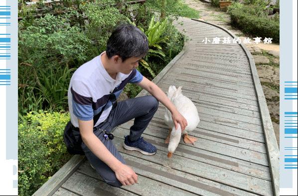 109.5.7.(46)苗栗-湖畔花時間.JPG
