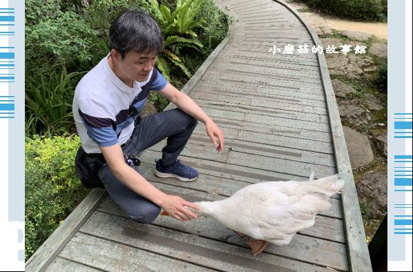 109.5.7.(47)苗栗-湖畔花時間.JPG