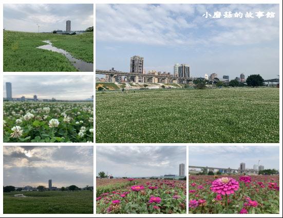 109.5.1.(99)新北大都會公園.JPG