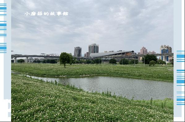 109.5.1.(3)新北大都會公園.JPG