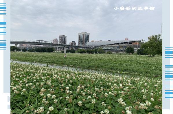 109.5.1.(4)新北大都會公園.JPG