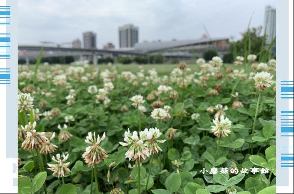 109.5.1.(5)新北大都會公園.JPG