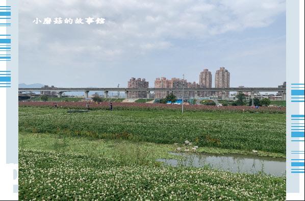 109.5.1.(7)新北大都會公園.JPG