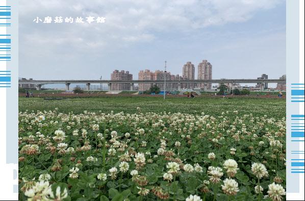 109.5.1.(8)新北大都會公園.JPG