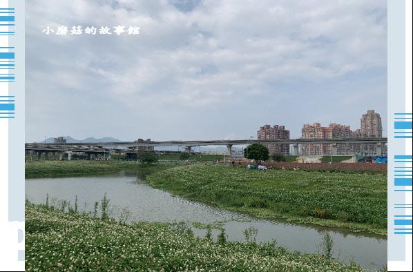 109.5.1.(11)新北大都會公園.JPG