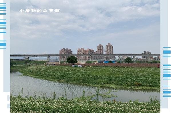 109.5.1.(12)新北大都會公園.JPG