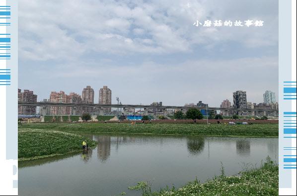 109.5.1.(14)新北大都會公園.JPG