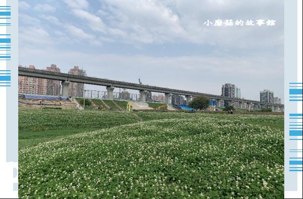 109.5.1.(19)新北大都會公園.JPG