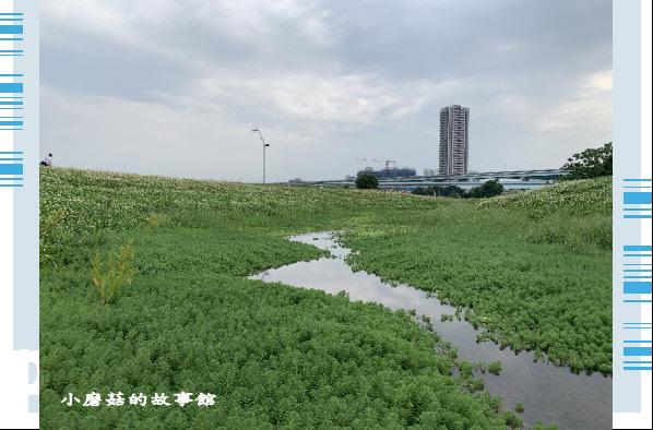 109.5.1.(24)新北大都會公園.JPG