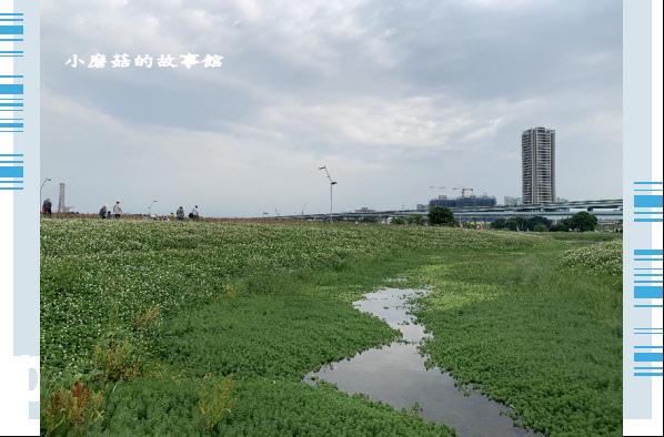 109.5.1.(26)新北大都會公園.JPG