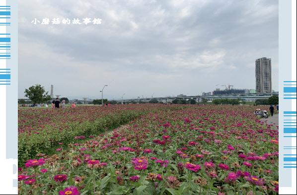 109.5.1.(30)新北大都會公園.JPG