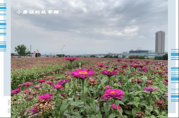 109.5.1.(32)新北大都會公園.JPG