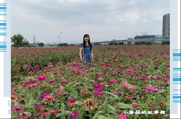 109.5.1.(33)新北大都會公園.JPG