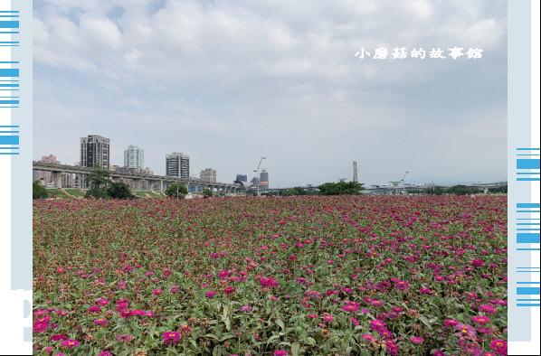 109.5.1.(37)新北大都會公園.JPG