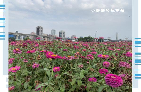109.5.1.(38)新北大都會公園.JPG