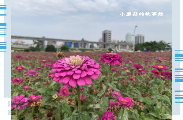109.5.1.(41)新北大都會公園.JPG