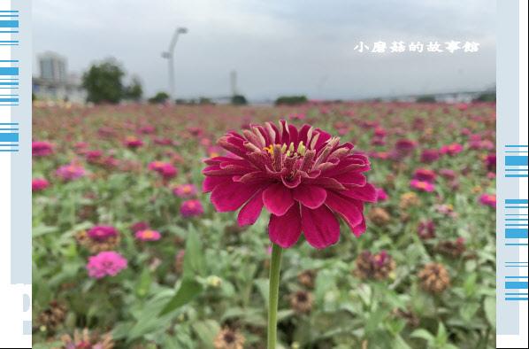 109.5.1.(43)新北大都會公園.JPG