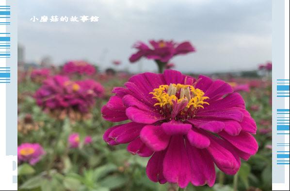 109.5.1.(44)新北大都會公園.JPG