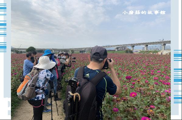 109.5.1.(45)新北大都會公園.JPG