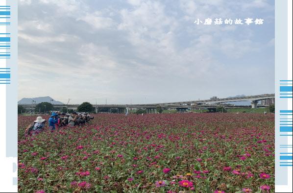 109.5.1.(47)新北大都會公園.JPG