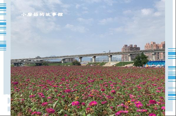 109.5.1.(49)新北大都會公園.JPG