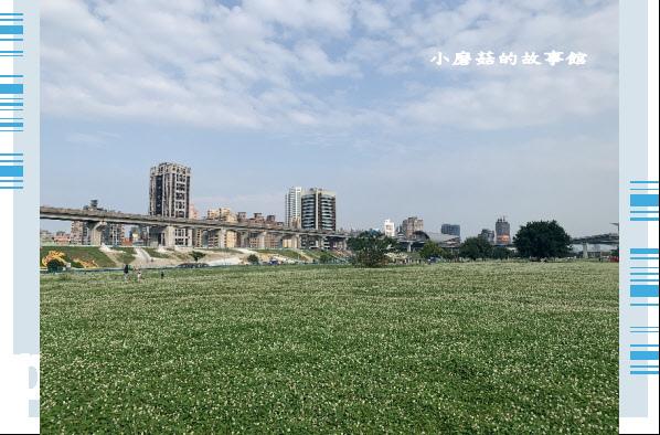 109.5.1.(57)新北大都會公園.JPG