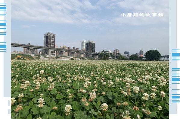 109.5.1.(58)新北大都會公園.JPG
