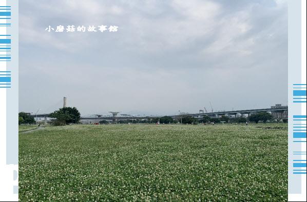 109.5.1.(68)新北大都會公園.JPG