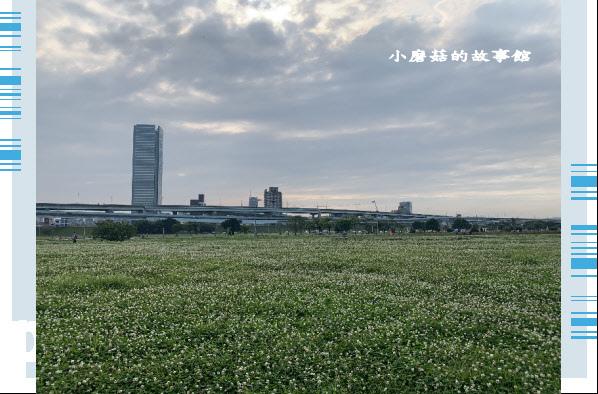 109.5.1.(70)新北大都會公園.JPG