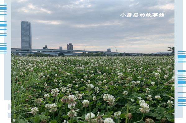 109.5.1.(71)新北大都會公園.JPG