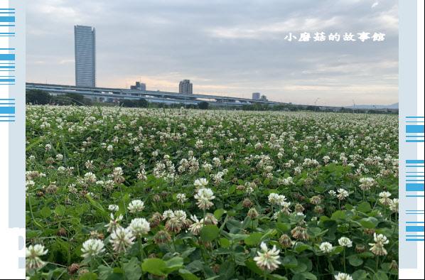 109.5.1.(73)新北大都會公園.JPG