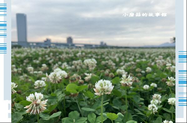 109.5.1.(74)新北大都會公園.JPG