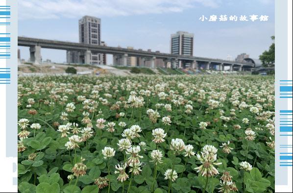 109.5.1.(75)新北大都會公園.JPG