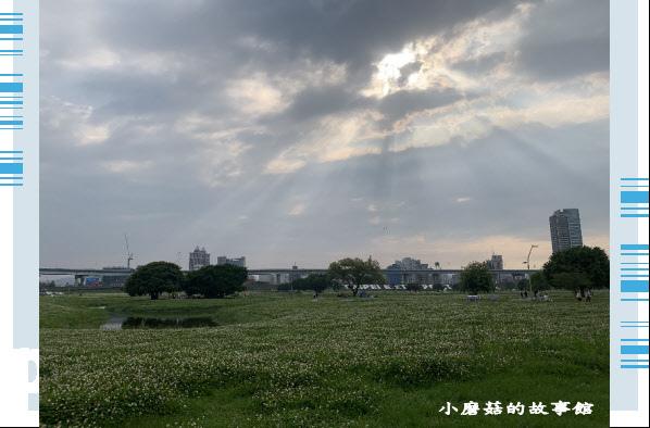 109.5.1.(88)新北大都會公園.JPG