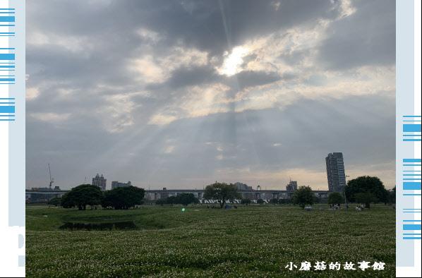 109.5.1.(90)新北大都會公園.JPG