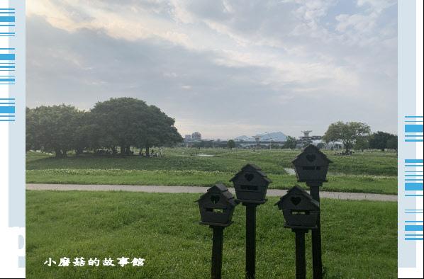 109.5.1.(98)新北大都會公園.JPG