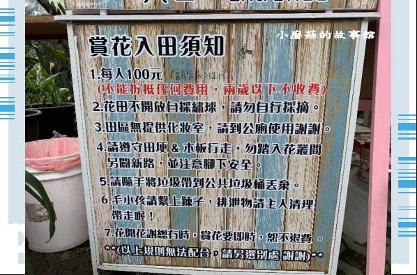 109.6.3.(2)財福繡球花田.JPG