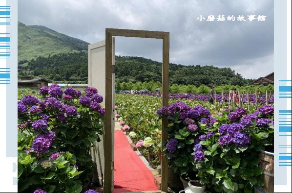 109.6.3.(3)財福繡球花田.JPG
